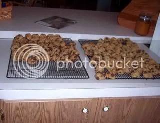 Honey, I love you cookies!