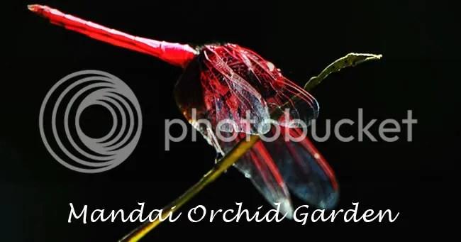 Mandai Orchid Garden