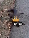 king squirrely