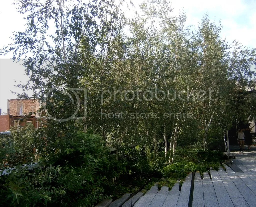 photo 13_Birches_zpsohw2wtpa.jpg