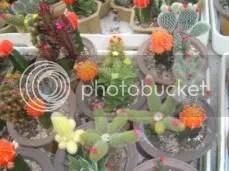 WARNING: Fake Flowers On These Cactus.