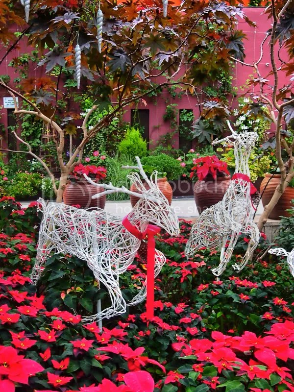 Reindeers, Flower Dome, Gardens by the Bay