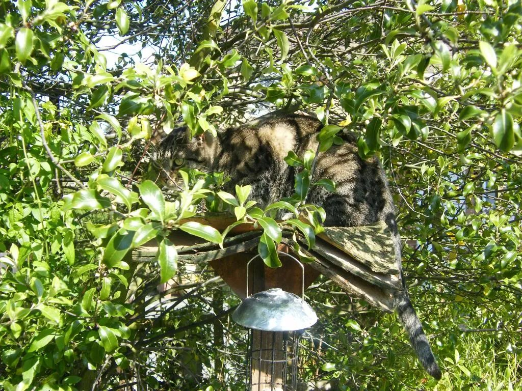 Tabby cat sitting on a bird table, almost hidden by trees