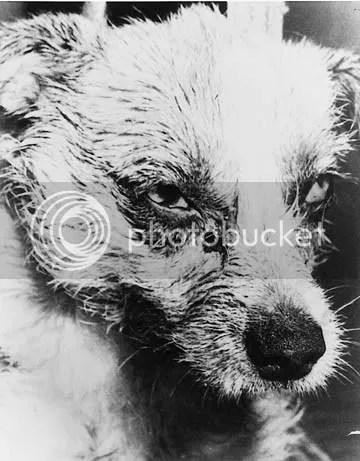 Σκύλος με λύσσα