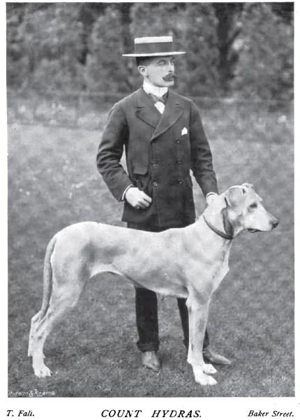 1899 Great Dane photo 1899_GreatDane.jpg