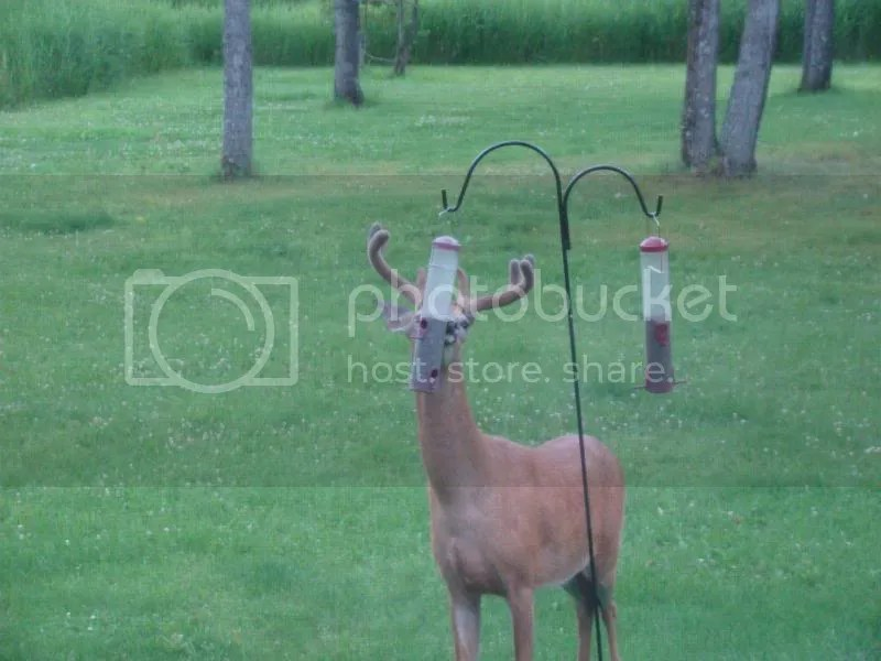 Bird feeder turned deer feeder photo DSC08739.jpg