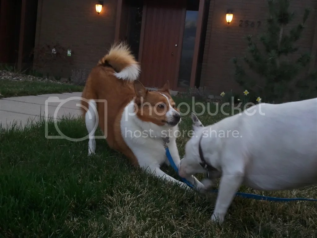 Atrus and Midna Playing