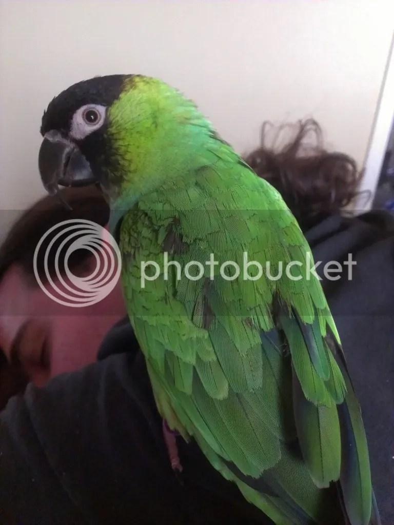 Beaky on Thrack, plus Thrack's hair