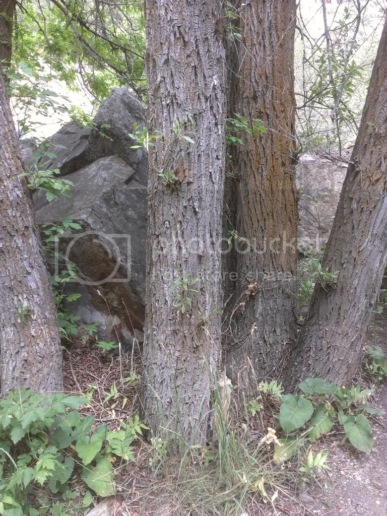 Giant Fallen Granite Boulder & Trees