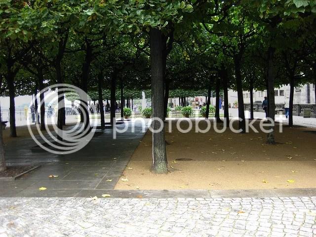 Dresden - Trees