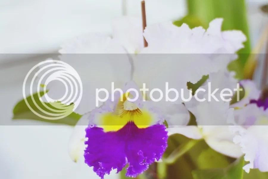 photo DSC_2328-1_zpsdt2h2thv.jpg