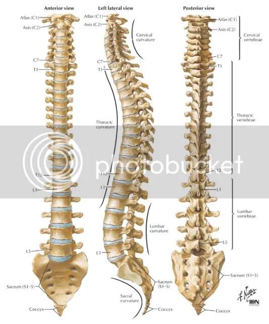 Get a backbone!