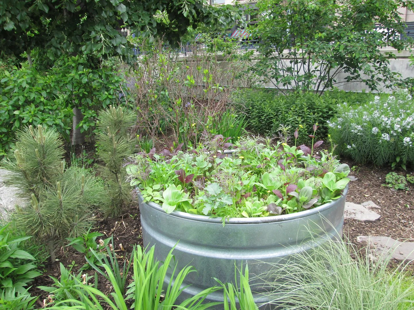 urban garden with veggies in a large metal bin