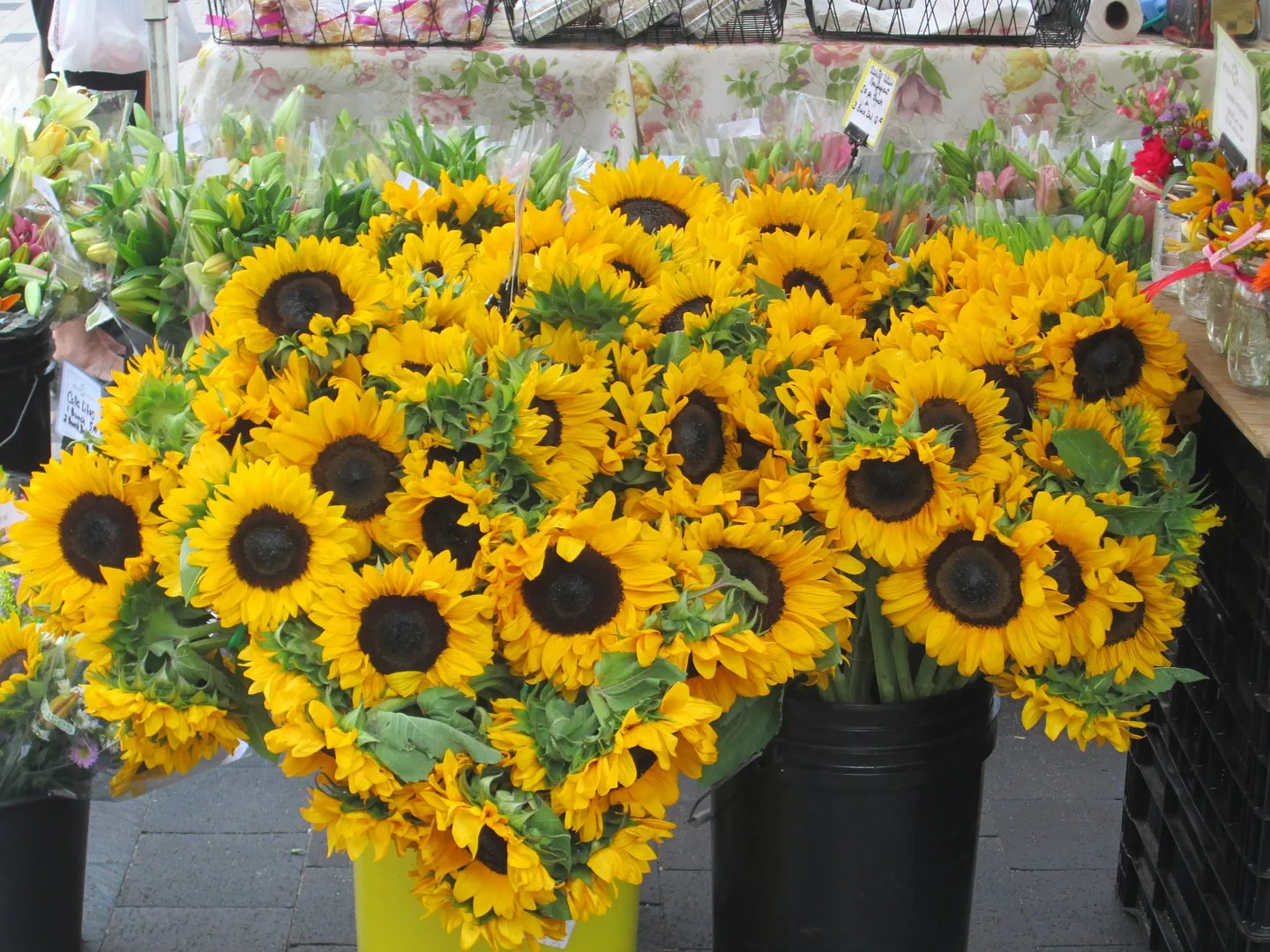 two buckets full of sunflowers at farmers market