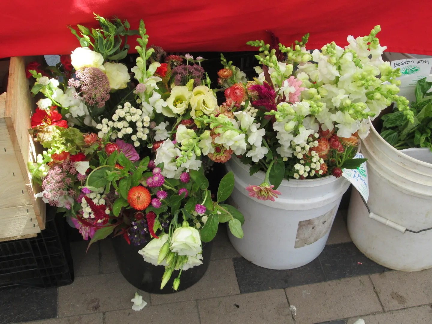 buckets of multicolored flowers at the farmers market