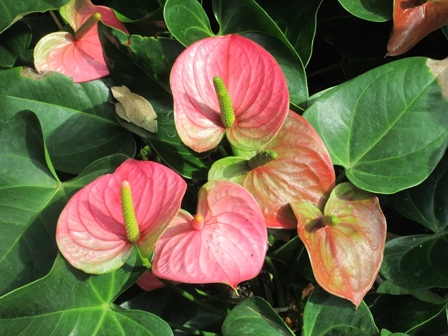 tropical pink and green flowers