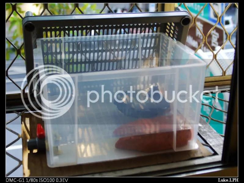 烏龜·飼養·烏龜飼養箱diy – 青蛙堂部落格