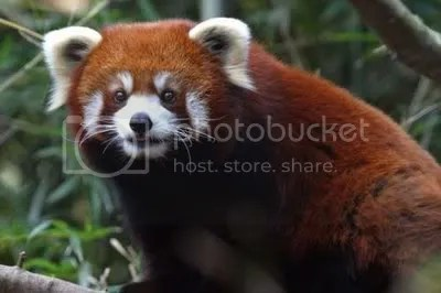 O Firefox!