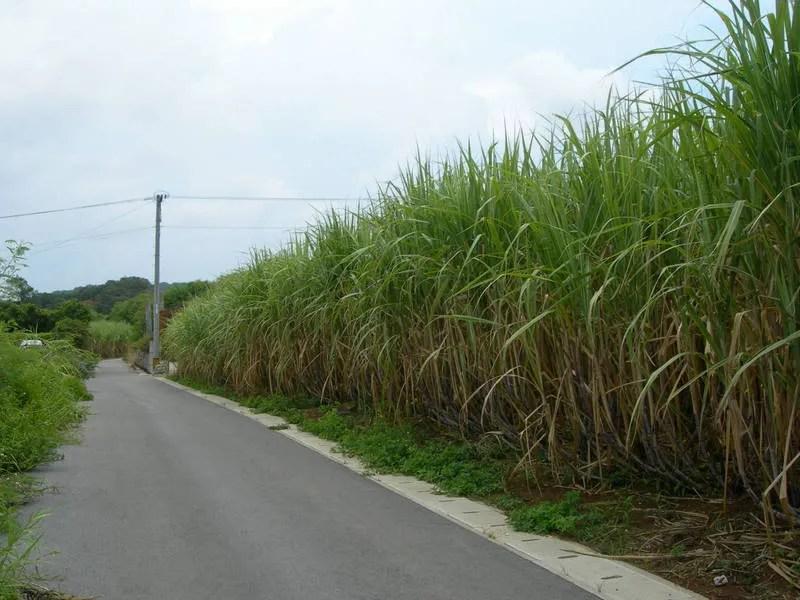 Campos de Itoman