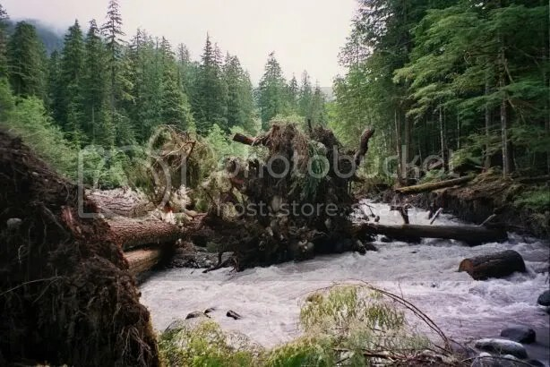 Mt. Rainier, Carbon River (July 2005)