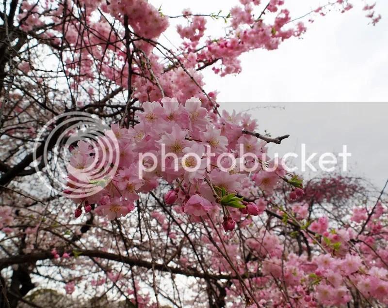 photo DSCF4770.jpg