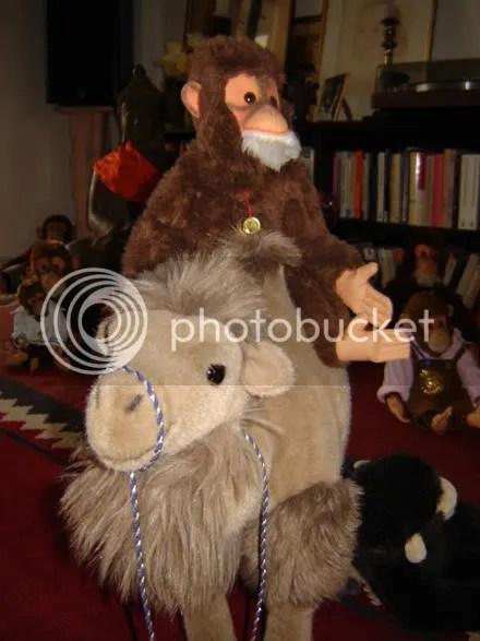 Monkey on Camel