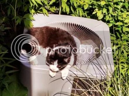 AC Cat II
