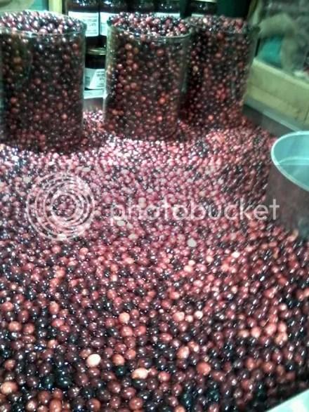 Mini Cranberry Bog