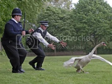 Sandford's finest try to capture an uncooperative suspect