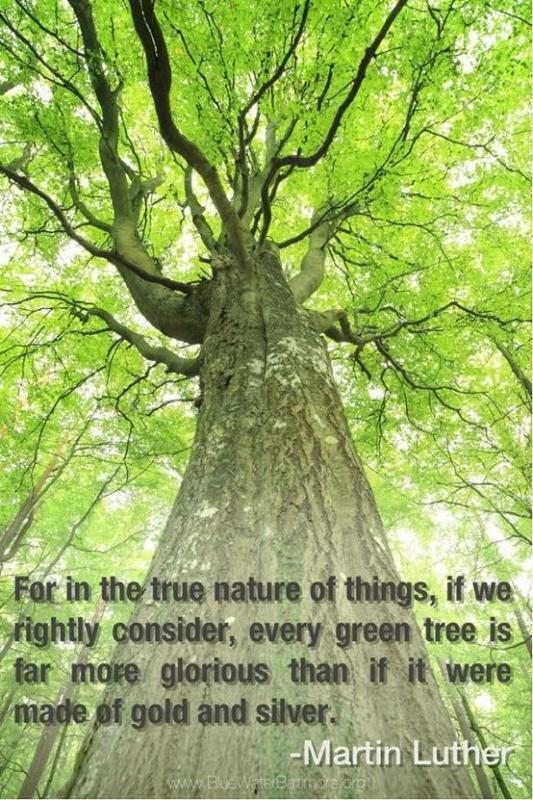 Most Heres Are Quotes And Things Life About Picture Life Tree Important