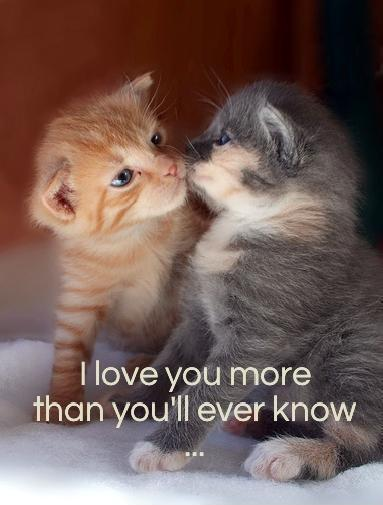 I Love You More Than Quotes: I Love You More Than You Know Quotes