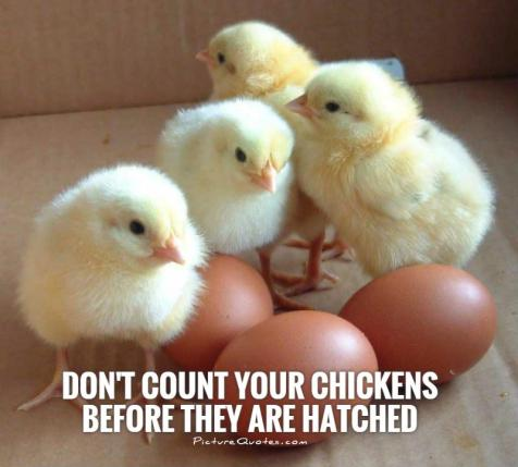 Image result for don't count your chickens before they hatch meme