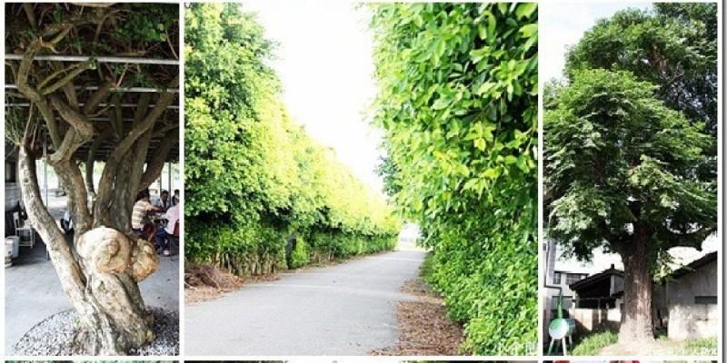 深度旅遊|【雲林元長。風土好生活】鹿北社區的唯美秘境 叫人驚嘆的榕樹牆