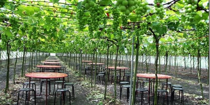 溪湖。小旅行|【東螺溪自然生態教育園區】葡萄園下的美食饗宴 綠色隧道的慢活旅程