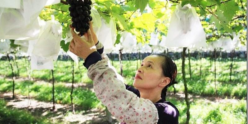 苗栗‧卓蘭二日遊。景點 【白布帆農場】來苗栗不只採草莓 還可以採葡萄/楊桃 一起採果趣
