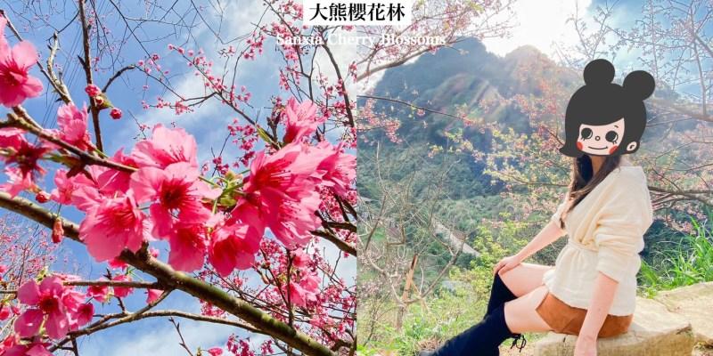 三峽大熊櫻花林-含交通門票|新北三峽景點|四色櫻花齊爆發的賞櫻秘境 仙氣美照就醬拍!
