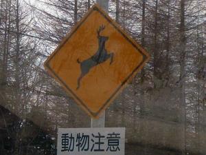 エゾシカ横断注意