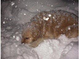 雪の中でも平気で眠っているクッキー