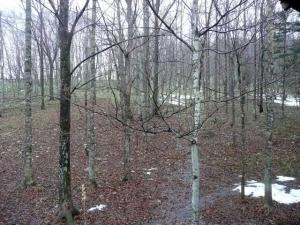 すっかり雪が消えた森
