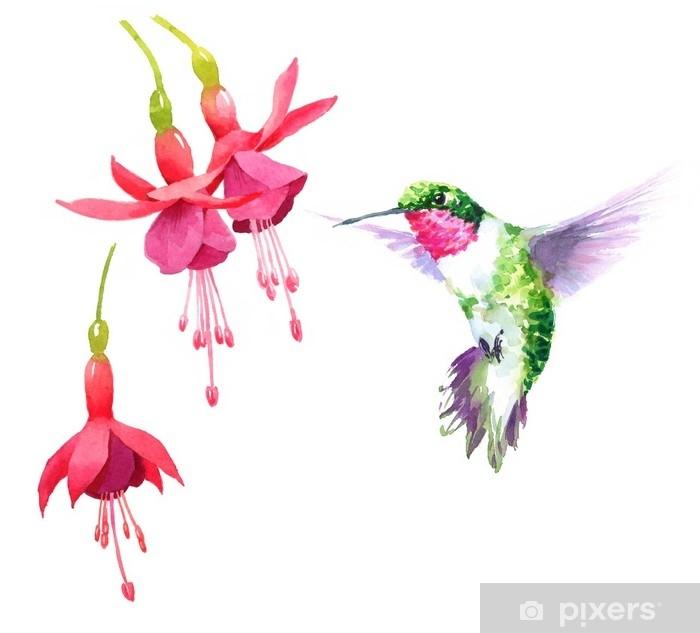 rideau occultant colibri oiseau aquarelle battant autour de la fuchsia fleurs dessines a la main ete jardin illustration jeu isole sur fond blanc pixers nous vivons pour changer