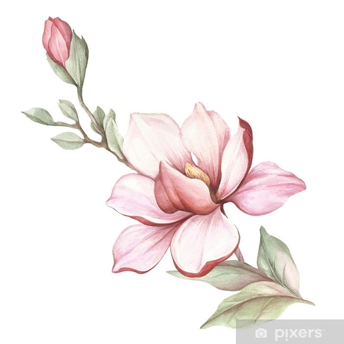Adesivo Immagine del ramo di magnolia in fiore illustrazione ad acquerello  Pixers  Viviamo