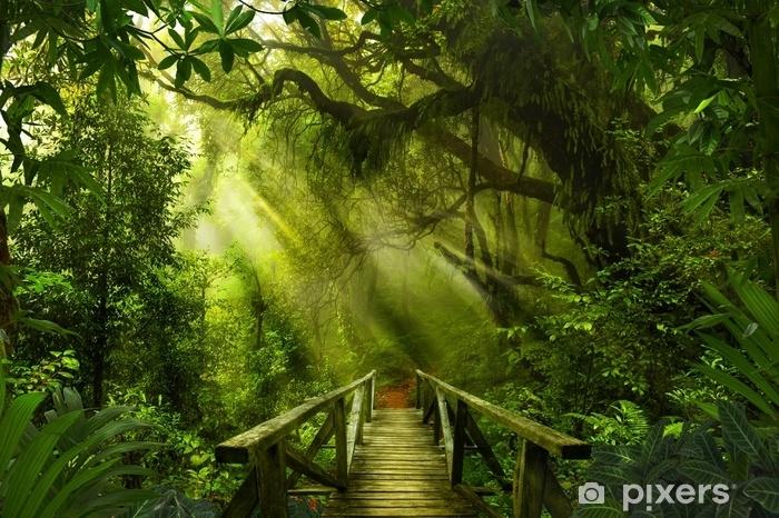 Fototapete Asiatischer tropischer Regenwald  Pixers  Wir leben um zu verndern