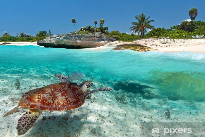 sticker paysage mer des caraibes avec la tortue verte au mexique pixers nous vivons pour changer