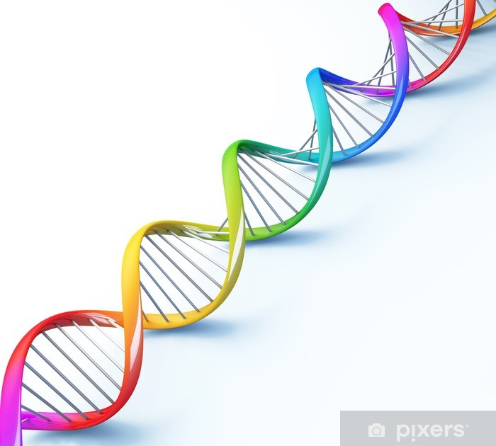 dna helix strand genetic