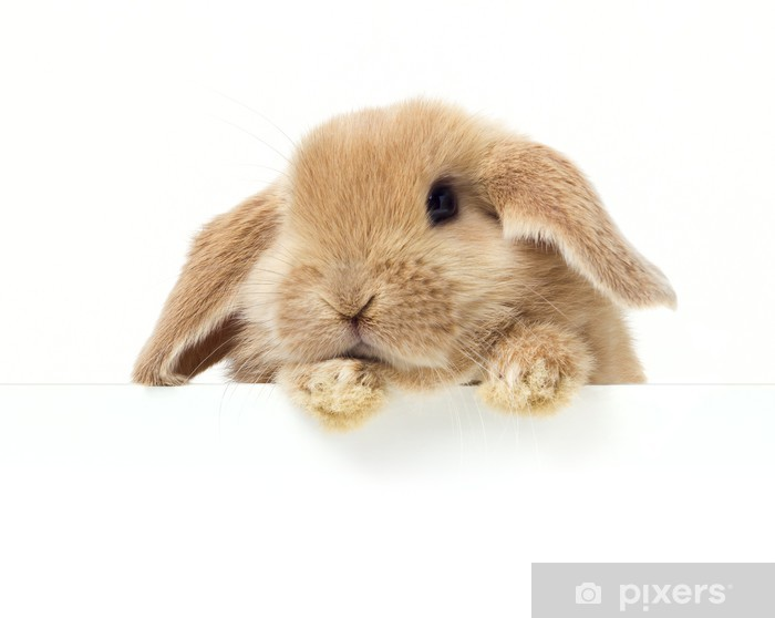 cute rabbit close up