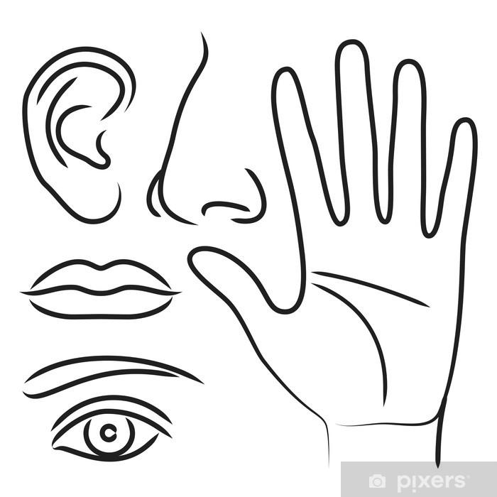 Aufkleber Sinnesorgane Hand, Nase, Ohr, Mund und Auge