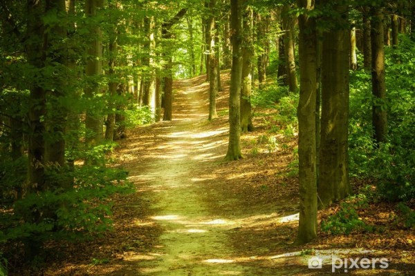 forest landscape wall mural pixers