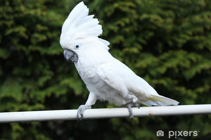 Fototapete Weier Vogel Papagei Kakadu  Pixers  Wir