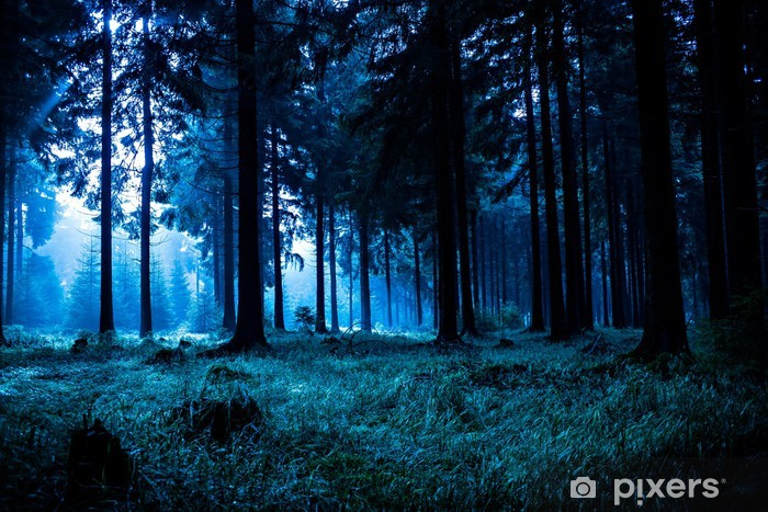 night forest wall mural