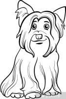 Fototapete Yorkshire Terrier Hund Malbuch • Pixers®   Wir ...